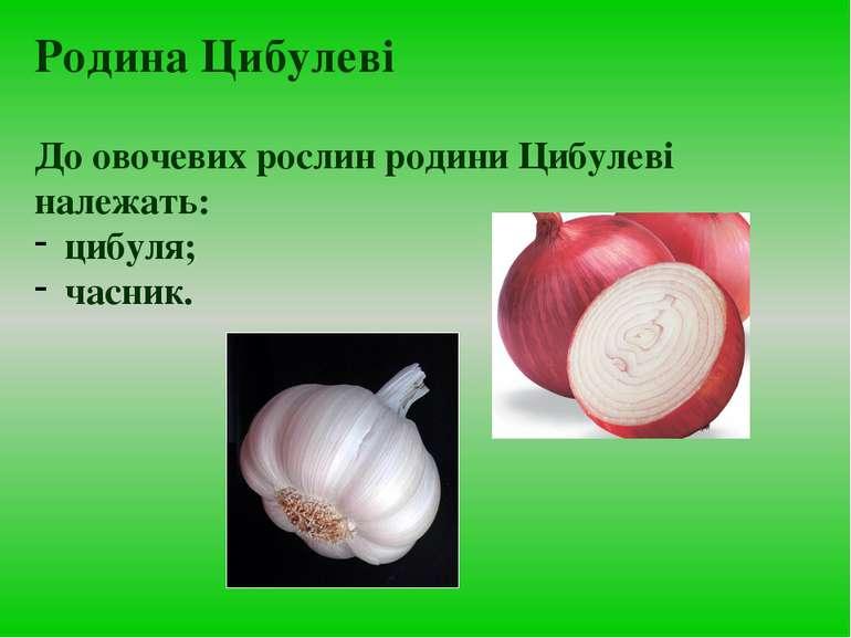 До овочевих рослин родини Цибулеві належать: цибуля; часник. Родина Цибулеві