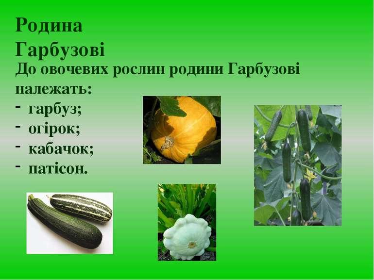 До овочевих рослин родини Гарбузові належать: гарбуз; огірок; кабачок; патісо...