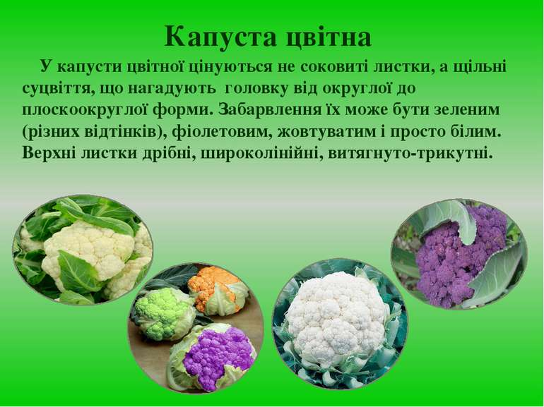 Капуста цвітна У капусти цвітної цінуються не соковиті листки, а щільні суцві...