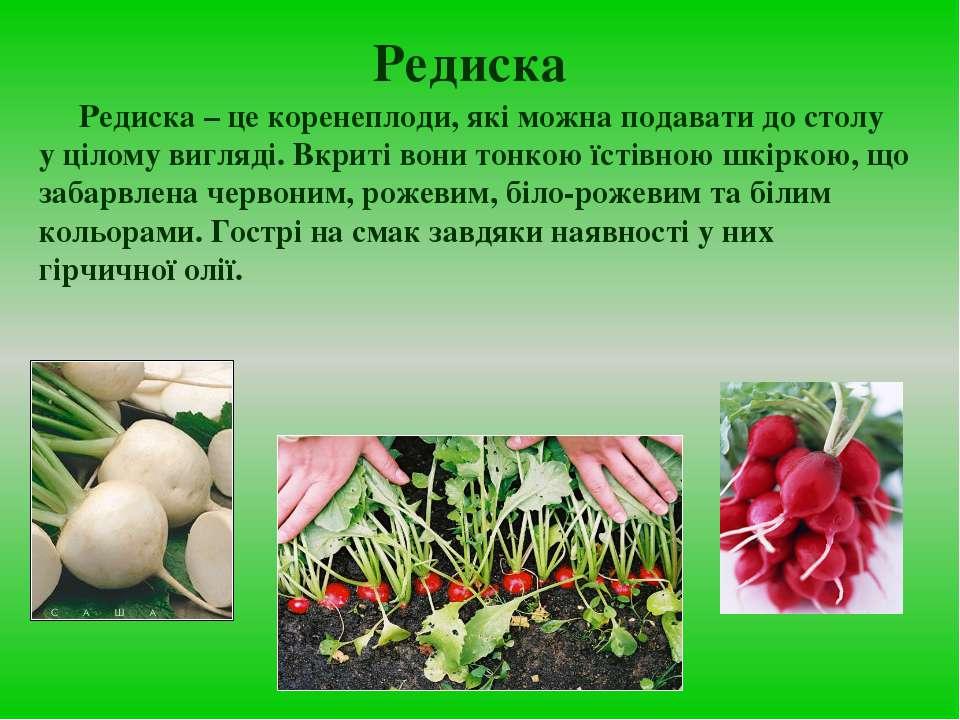Редиска Редиска – це коренеплоди, які можна подавати до столу у цілому вигляд...