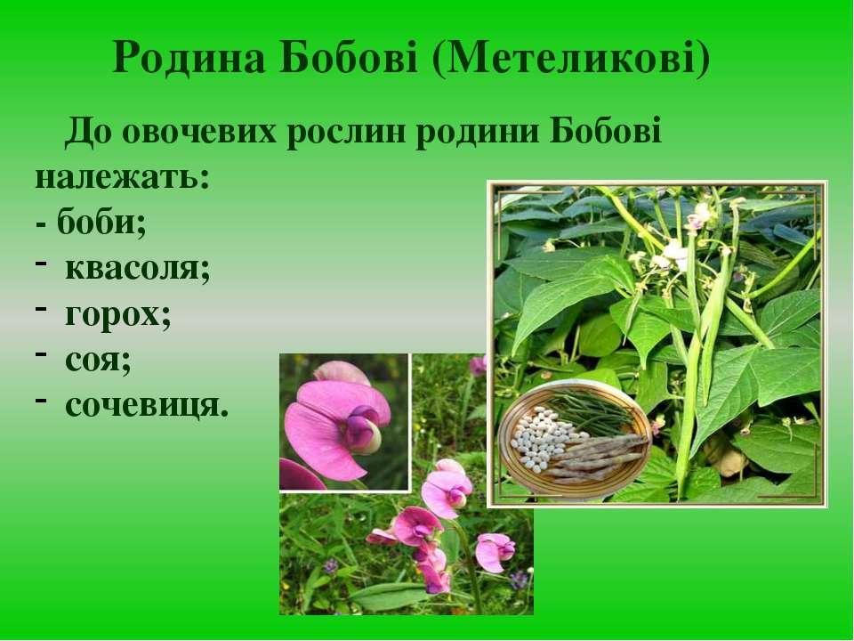 До овочевих рослин родини Бобові належать: - боби; квасоля; горох; соя; сочев...