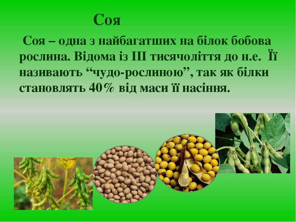 Соя Cоя – одна з найбагатших на білок бобова рослина. Відома із ІІІ тисячоліт...