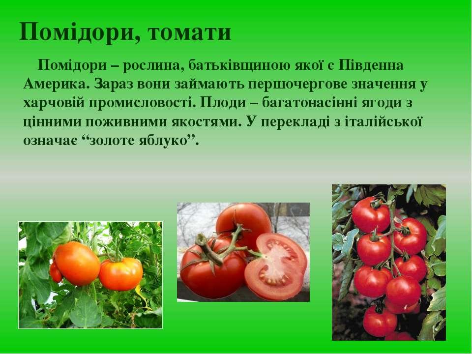 Помідори, томати Помідори – рослина, батьківщиною якої є Південна Америка. За...