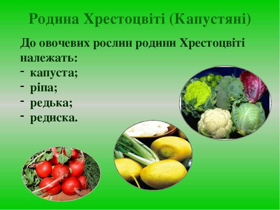 До овочевих рослин родини Хрестоцвіті належать: капуста; ріпа; редька; редиск...