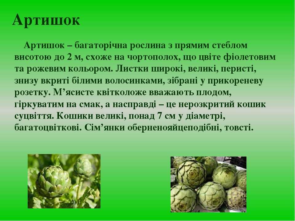 Артишок Артишок – багаторічна рослина з прямим стеблом висотою до 2 м, схоже ...
