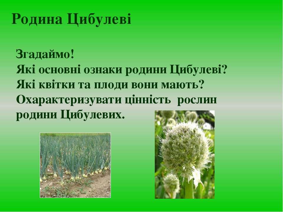 Згадаймо! Які основні ознаки родини Цибулеві? Які квітки та плоди вони мають?...