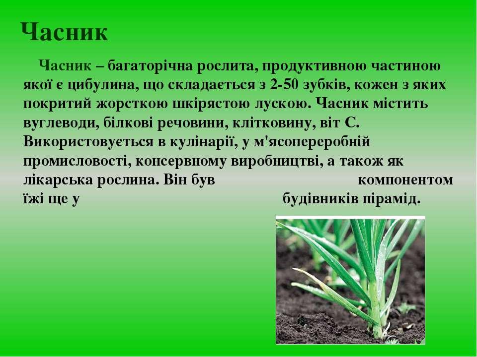 Часник Часник – багаторічна рослита, продуктивною частиною якої є цибулина, щ...