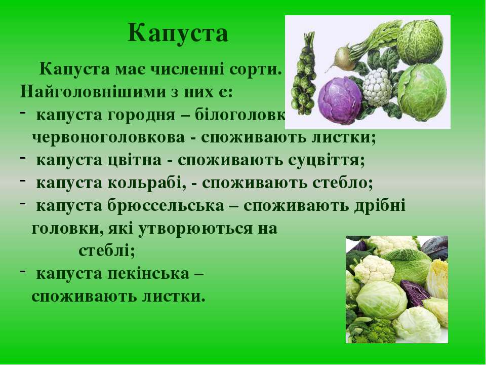 Капуста Капуста має численні сорти. Найголовнішими з них є: капуста городня –...
