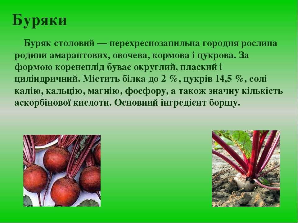 Буряки Буряк столовий — перехреснозапильна городня рослина родини амарантових...