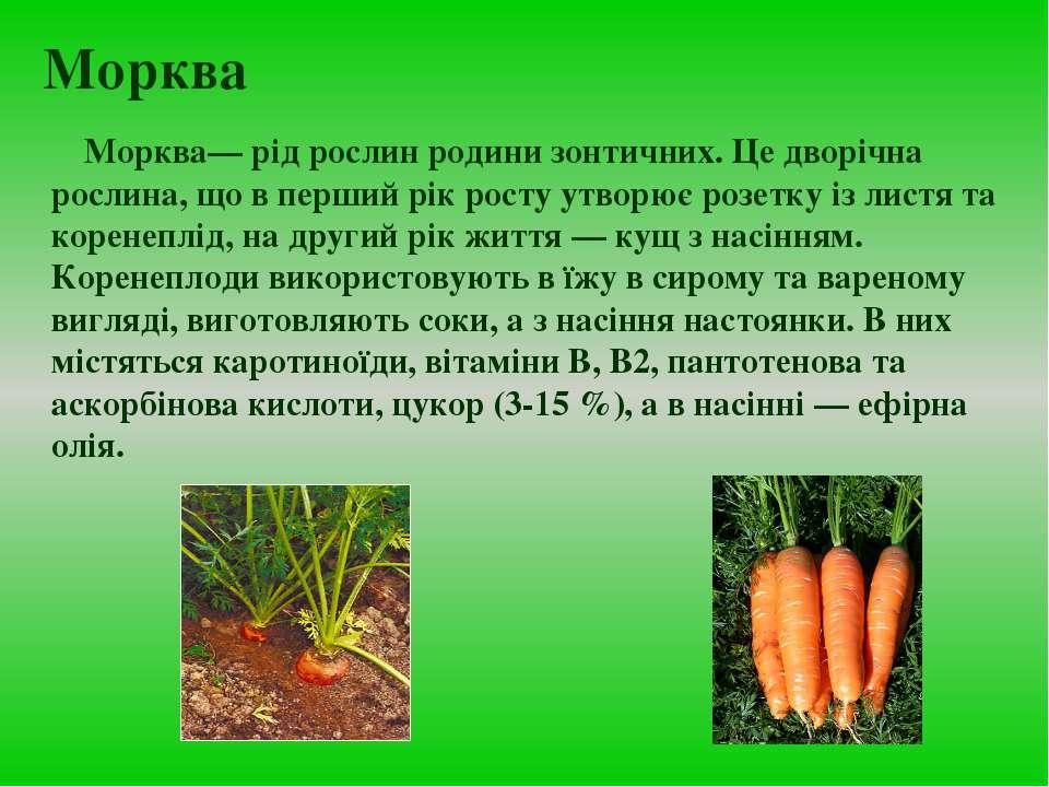Морква Морква— рід рослин родини зонтичних. Це дворічна рослина, що в перший ...