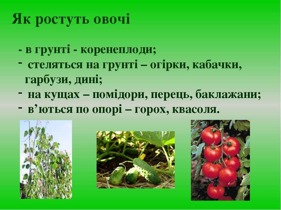 - в грунті - коренеплоди; стеляться на грунті – огірки, кабачки, гарбузи, дин...