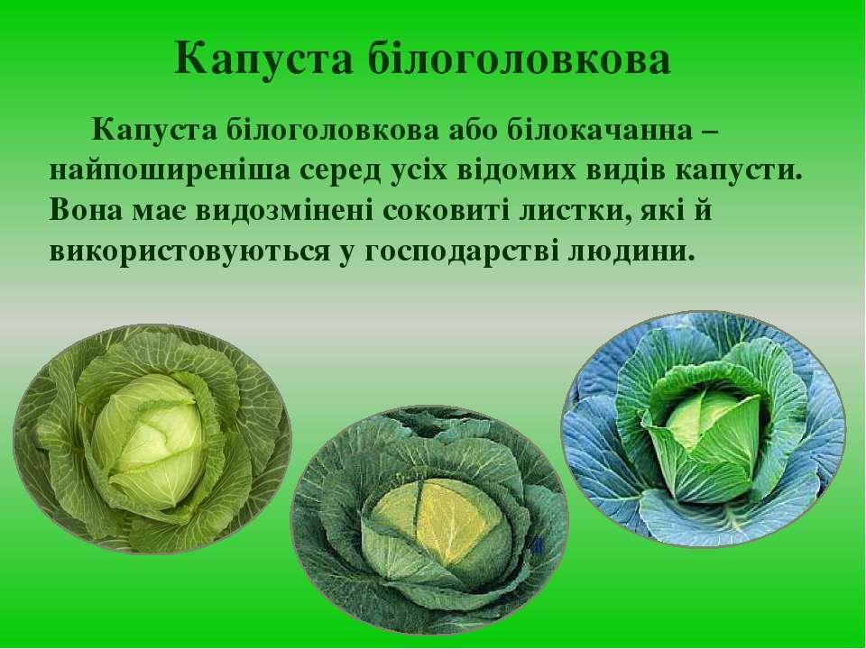Капуста білоголовкова Капуста білоголовкова або білокачанна – найпоширеніша с...