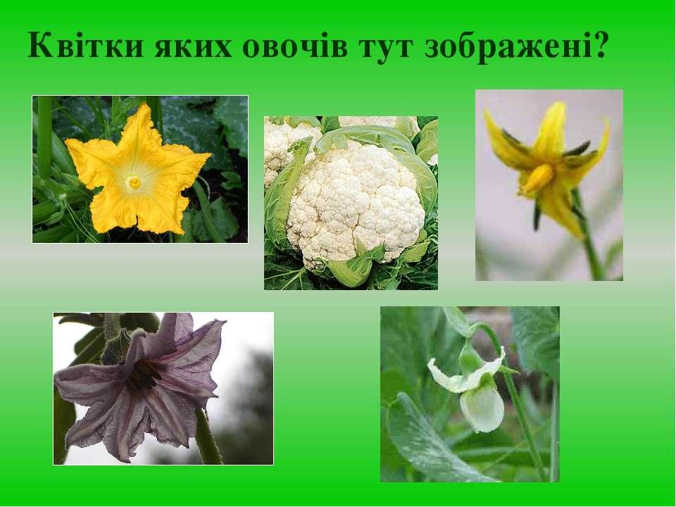 Квітки яких овочів тут зображені?