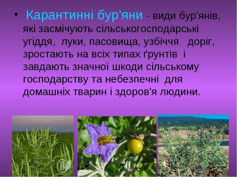 Карантинні бур'яни - види бур'янів, які засмічують сільськогосподарські угідд...