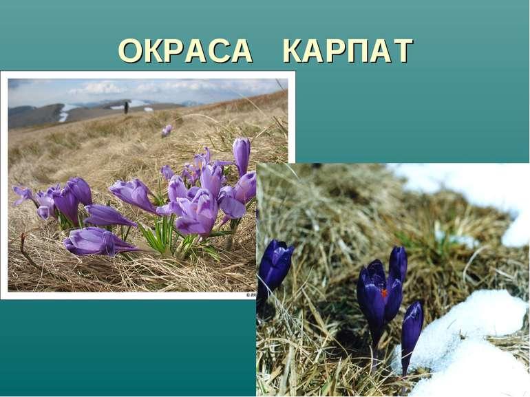 ОКРАСА КАРПАТ