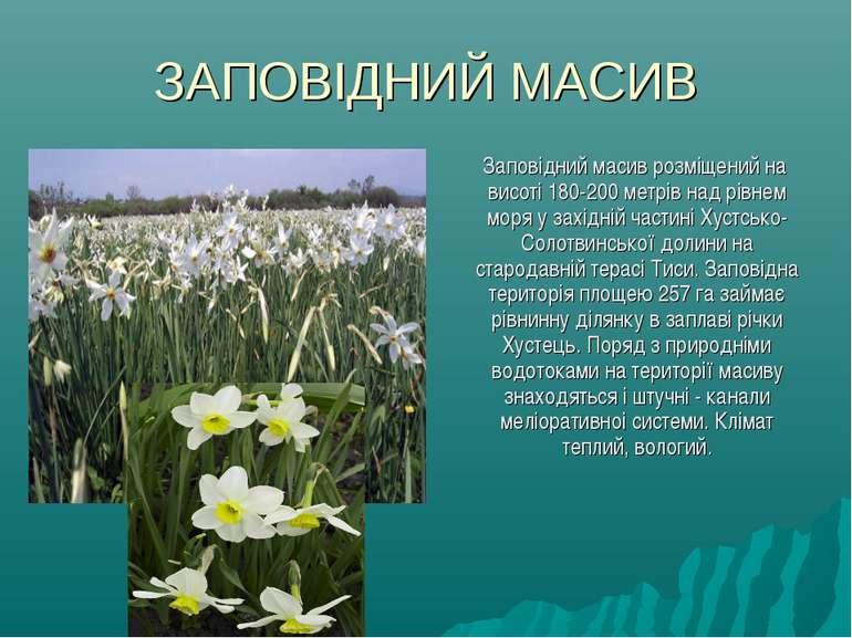ЗАПОВІДНИЙ МАСИВ Заповідний масив розміщений на висотi 180-200 метрів над рів...