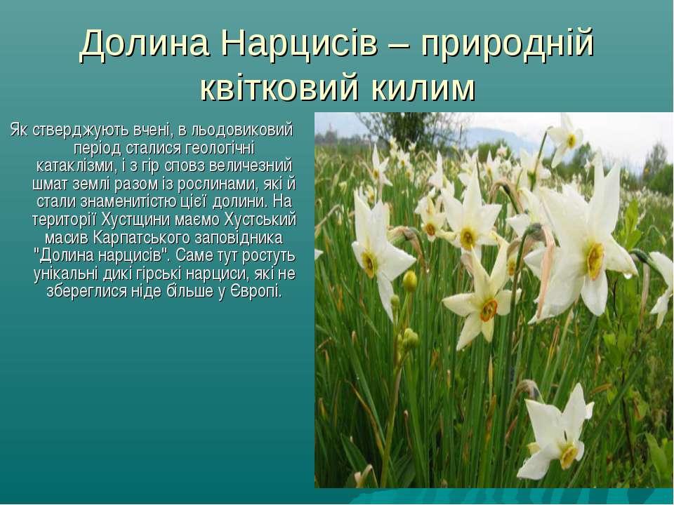 Долина Нарцисів – природній квітковий килим Як стверджують вчені, в льодовико...
