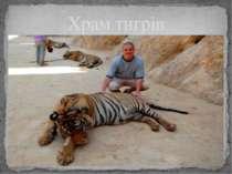 Храм тигрів