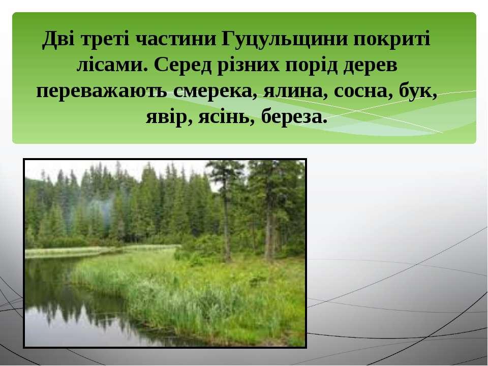 Дві треті частини Гуцульщини покриті лісами. Серед різних порід дерев переваж...