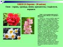 ОВЕН (21 березня - 20 квітня) Овен - герань, троянда, піони, хризантема, глад...
