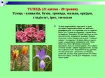 ТІЛЕЦЬ (21 квітня - 20 травня) Тілець - конвалія, бузок, троянда, мальва, орх...