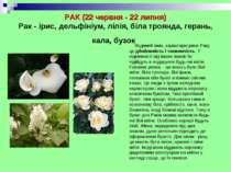 РАК (22 червня - 22 липня) Рак - ірис, дельфініум, лілія, біла троянда, геран...