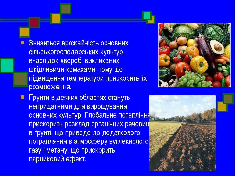 Знизиться врожайність основних сільськогосподарських культур, внаслідок хворо...