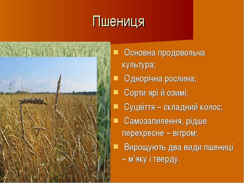 Пшениця Основна продовольча культура; Однорічна рослина; Сорти ярі й озимі; С...