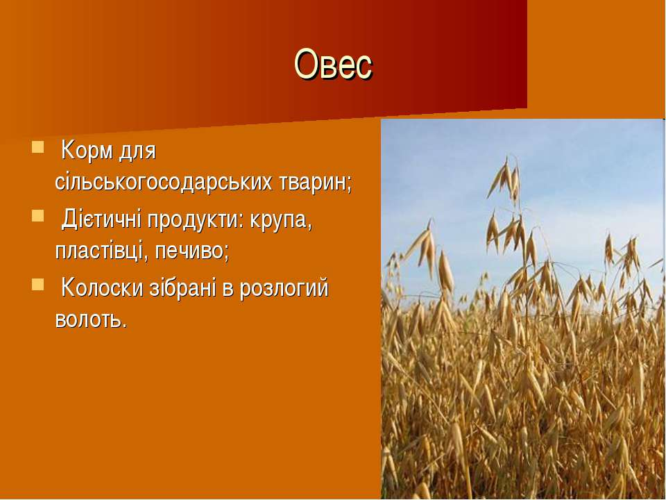 Овес Корм для сільськогосодарських тварин; Дієтичні продукти: крупа, пластівц...