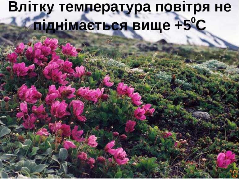 Влітку температура повітря не піднімається вище +50С