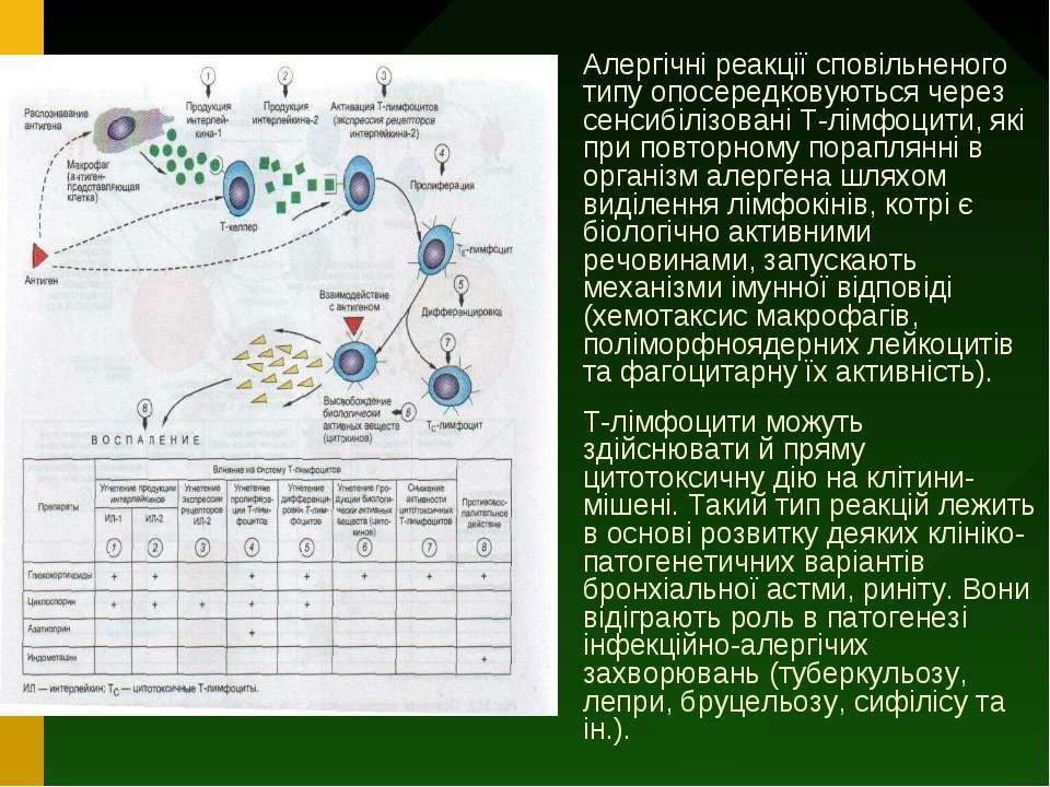Алергічні реакції сповільненого типу опосередковуються через сенсибілізовані ...
