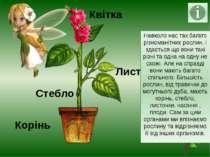 Листочки Навколо нас так багато різноманітних рослин, і здається що вони такі...