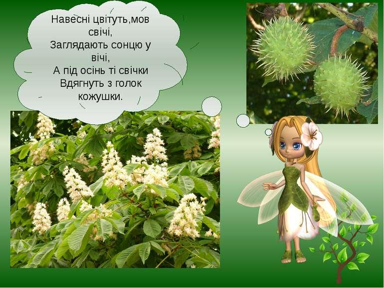 Навесні цвітуть,мов свічі, Заглядають сонцю у вічі, А під осінь ті свічки Вдя...