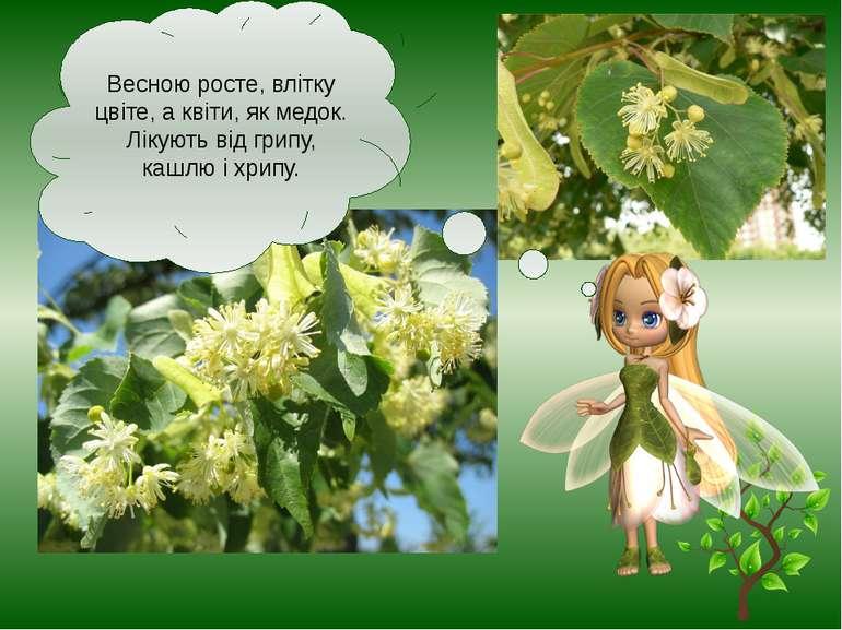 Весною росте, влітку цвіте, а квіти, як медок. Лікують від грипу, кашлю і хрипу.