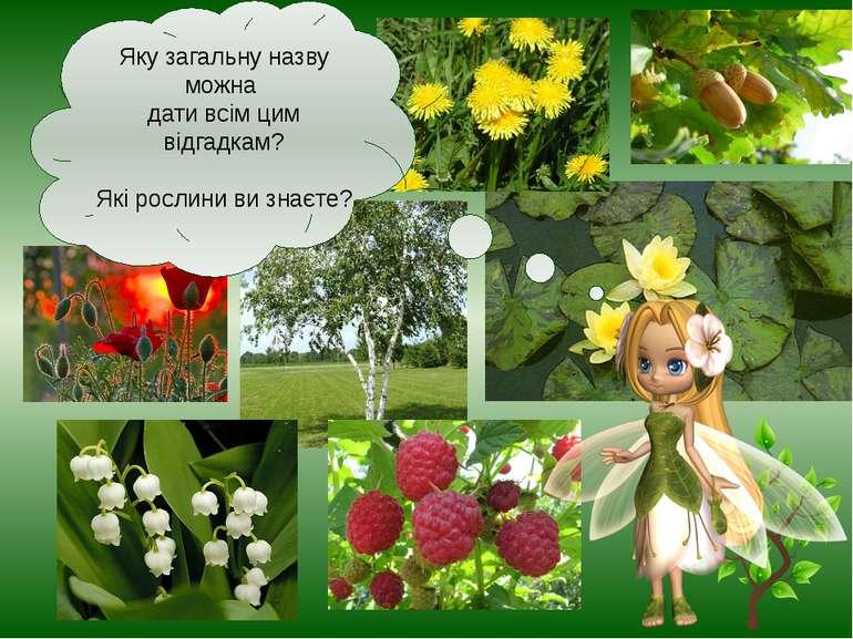 Яку загальну назву можна дати всім цим відгадкам? Які рослини ви знаєте?