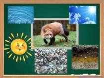 Що потрібно тваринам для життя
