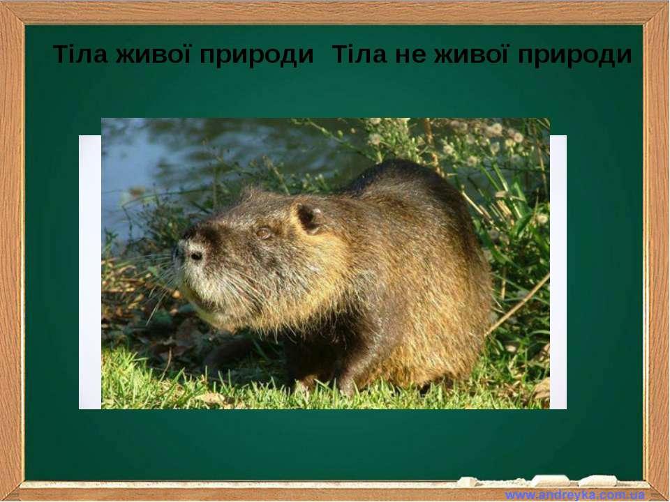Тіла живої природи Тіла не живої природи