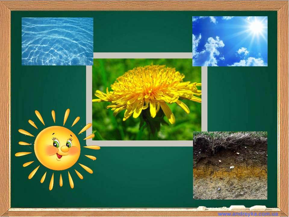 Що потрібно рослинам для життя