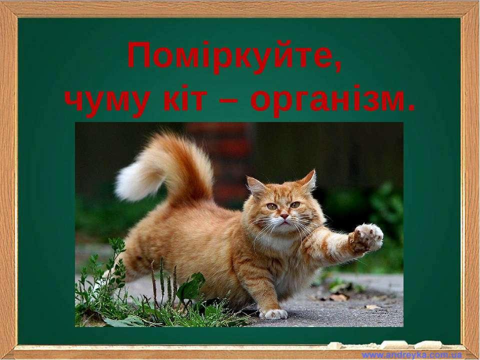 Поміркуйте, чуму кіт – організм.