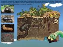 Що в ньому знаходиться? (коріння рослин, відмерлі рештки рослин, черв'яки, ко...
