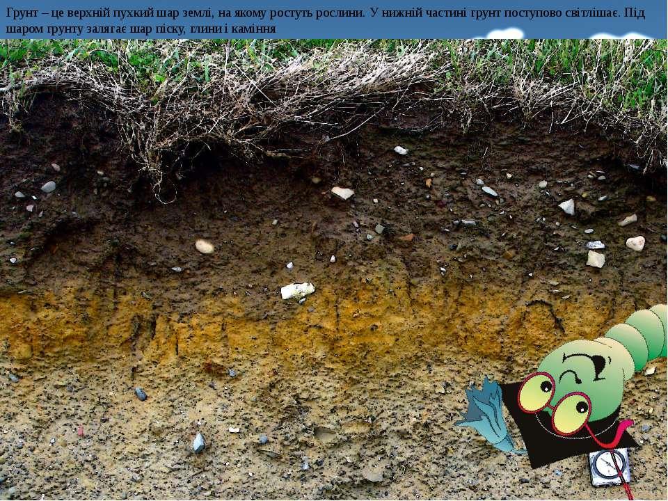 Грунт – це верхній пухкий шар землі, на якому ростуть рослини. У нижній части...