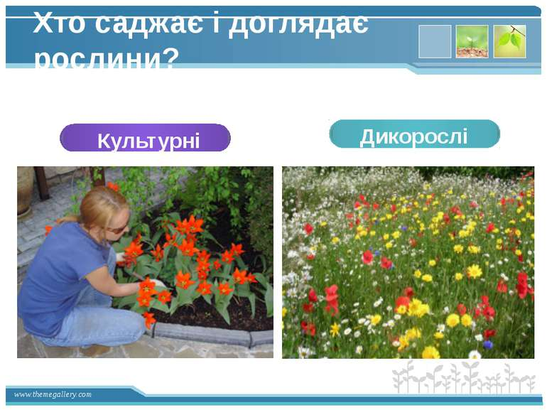 Хто саджає і доглядає рослини? Культурні Дикорослі www.themegallery.com