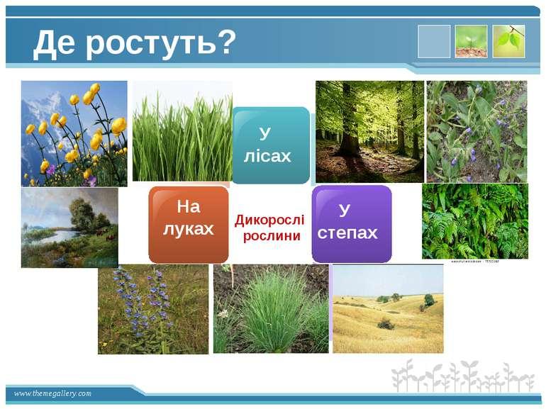 У лісах У степах На луках Дикорослі рослини Де ростуть? www.themegallery.com
