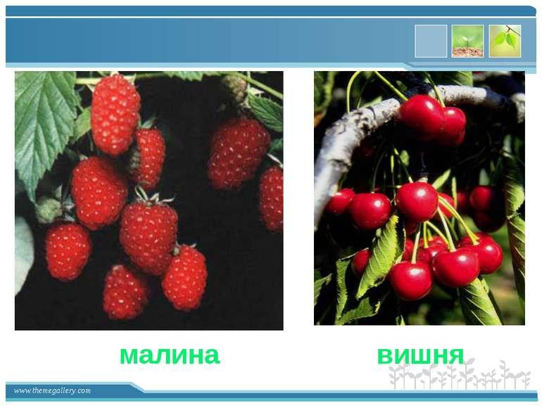 малина вишня www.themegallery.com