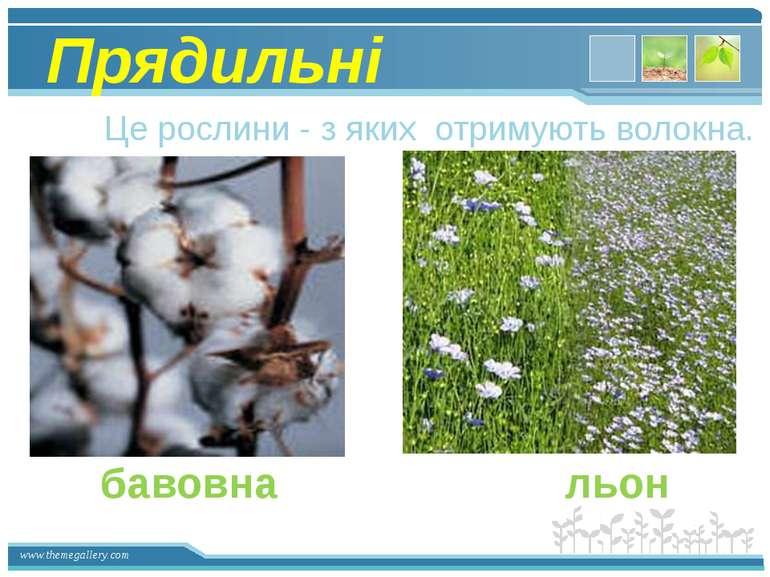 Прядильні Це рослини - з яких отримують волокна. бавовна льон www.themegaller...