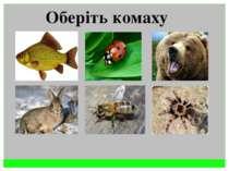 Оберіть комаху