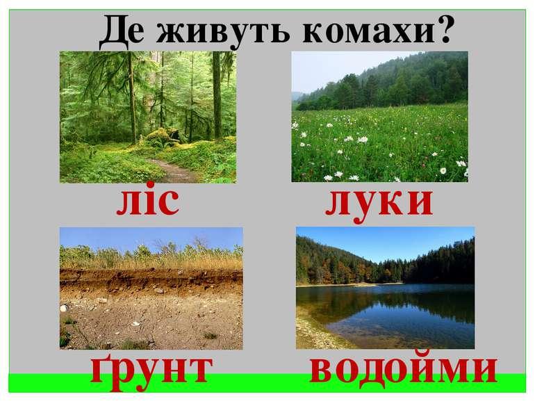 Де живуть комахи ліс, луки,грунт, водойми