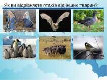 Як ви відрізняєте птахів від інших тварин?: