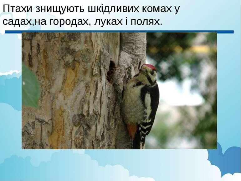 Птахи знищують шкідливих комах у садах,на городах, луках і полях.