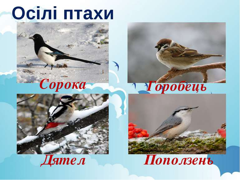 Осілі птахи Сорока Горобець Дятел Поползень